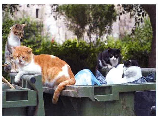 Plaga de palomas y gatos resuelta